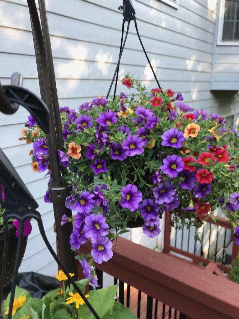 Mrs. D's purple babies | Living Science Academy