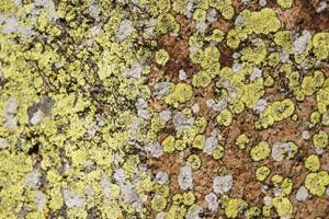 Lichens under the sun